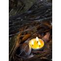 Exotac - Świeca ratunkowa - CandleTIN Emergencny 2100-SLO